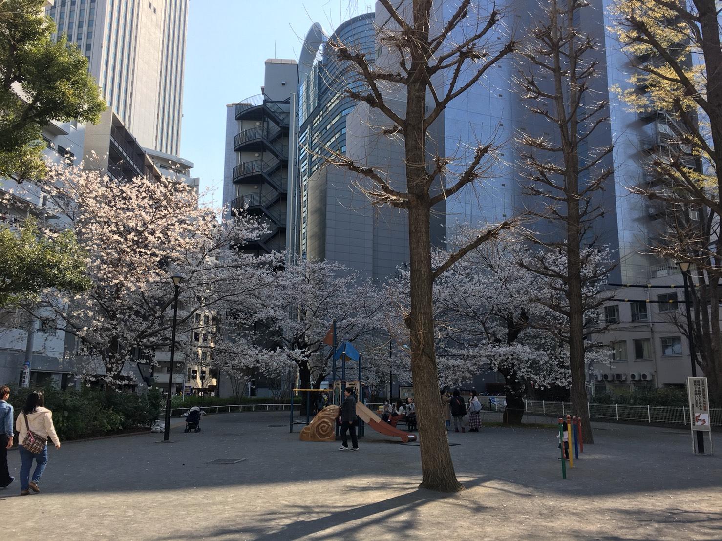 【池袋駅】春爛漫!公園まわって桜を見に行こう!池袋東口の満開公園お花見散歩コース。の東池袋公園1