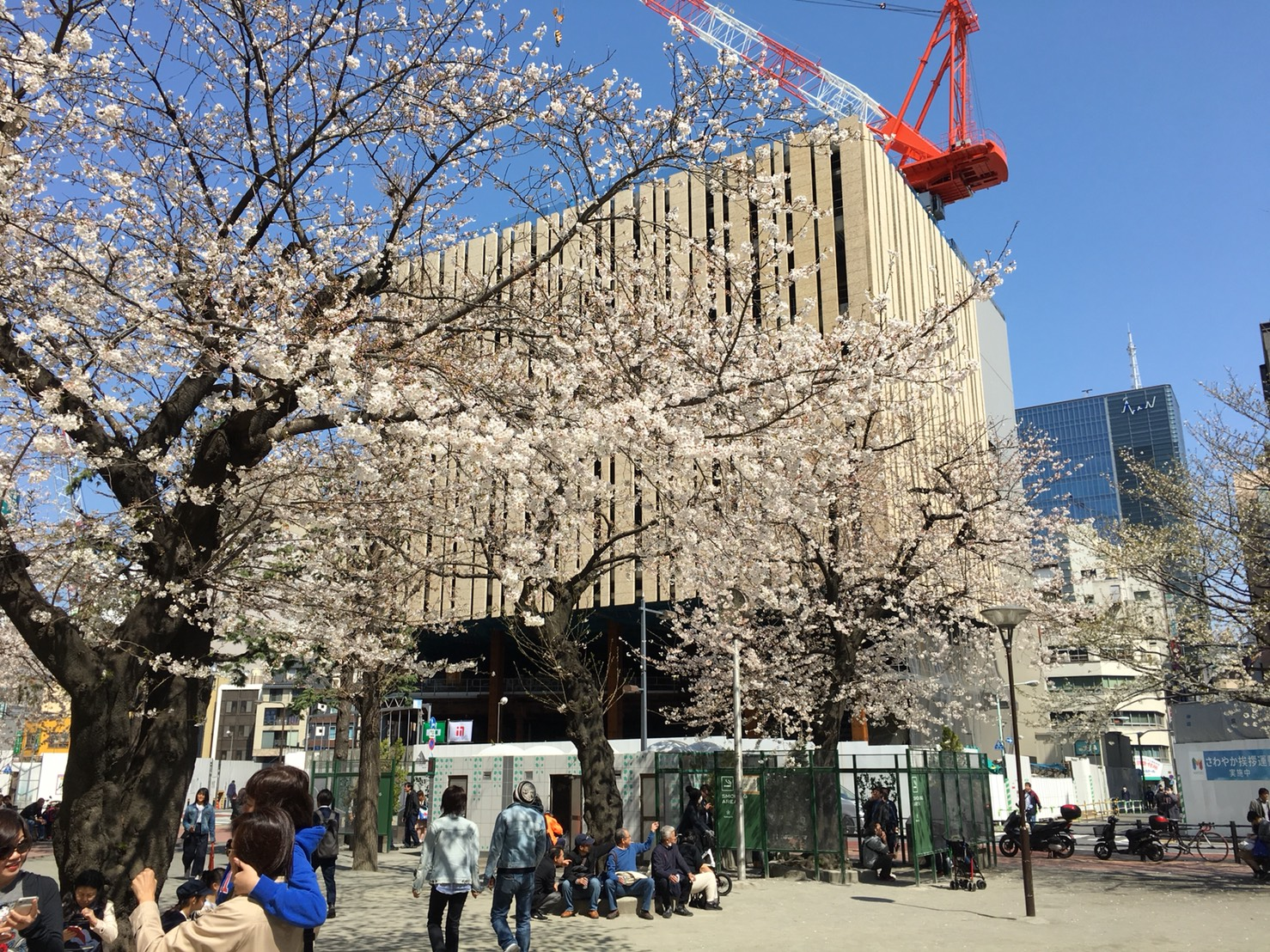 【池袋駅】春爛漫!公園まわって桜を見に行こう!池袋東口の満開公園お花見散歩コース。の中池袋公園2
