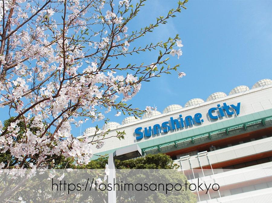 【池袋駅】4月4日から5日間開催「お花見フェアinサンシャインシティ」が楽しそう!これぞ都会のお花見。