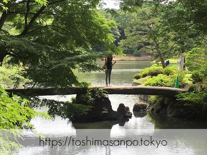 【駒込駅】歴史を学ぶいい日にしよう。和歌山市を模した江戸時代の庭園「六義園」で涼をとろう。の六義園の渡月橋