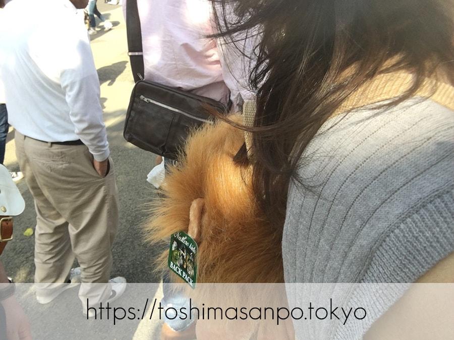 【上野駅】高速上野散歩を提案!大満足の絶品洋食「たいめいけん」のあとに上野動物園で超エンジョイの上野動物園のライオンナップを背負うみーちゃん