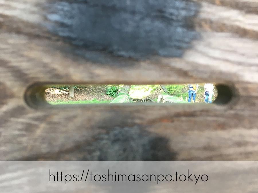 【汐留駅】水上バスにも乗れる!東京湾から繋がる江戸時代の広大な庭園「浜離宮恩賜庭園」の風情。の浜離宮恩賜庭園の鴨場の小覗